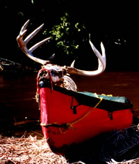 10-point buck found by Ken Rizzio along the bank of the Ocqueoc River